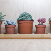 Vários jarros de barro com plantas suculentas de diferentes espécies